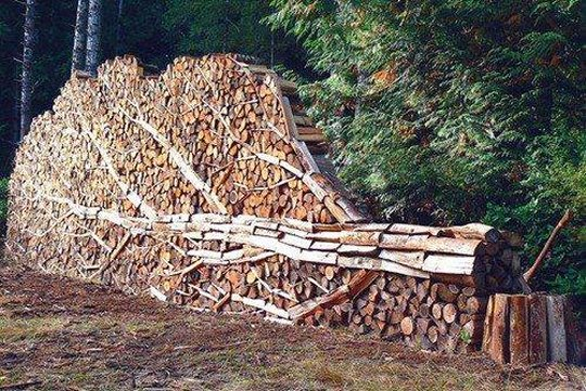 Artistic wood stack shaped like a tree