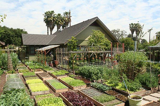 Homestead backyard